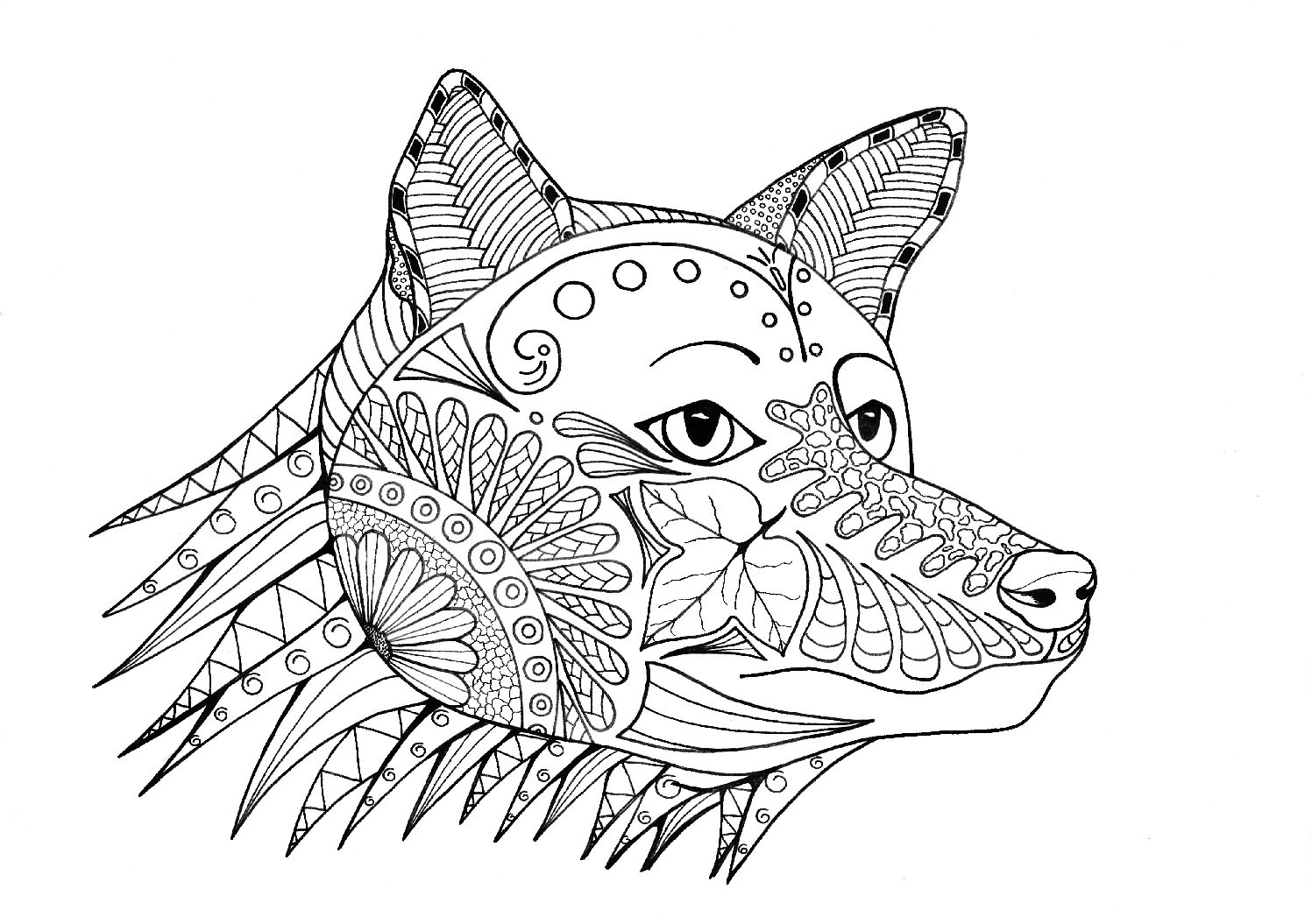 Coloring The Fox